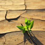 ¿Qué podemos hacer para frenar el cambio climático?