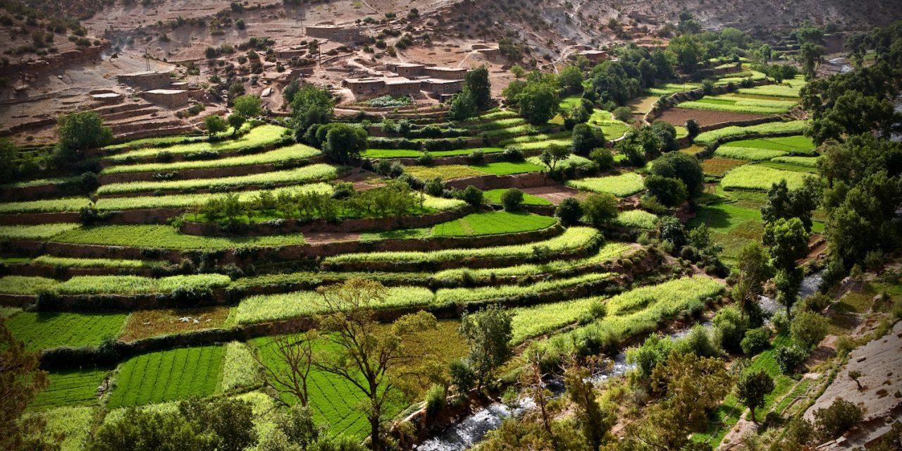 Desarrollo del cultivo de arroz en el Gharb (Marruecos)